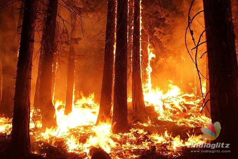 Kurangani forest fire leaves 10 dead; 8 are seriously injured